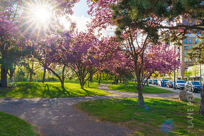 Father Hennepin Park - Spring 8