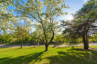 Father Hennepin Park - Spring