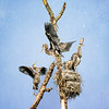 Heron Reserve - Juviniles - Crop