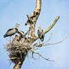 Heron Reserve - May 23