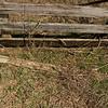 P. cinereus habitat from Chinook Wildlife Area in Clay Co., IN