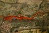 AB Plethodontidae Hemidactyliinae<br /> Eurycea lucifuga<br /> Cave Salamander<br /> Union County<br /> 2016