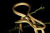 EEF Colubroidea Dipsadidae<br /> Philodryas argentea<br /> Green Striped Vine Snake<br /> Specimen #2<br /> Madre Selva