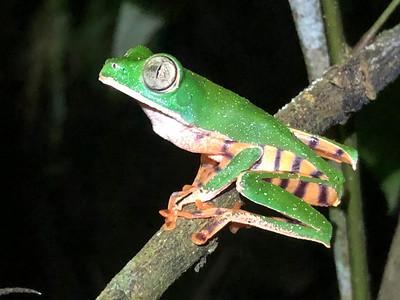 Peru Tarapoto