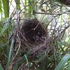 Empty nest.
