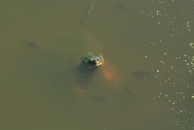 Turtles Beyond The Yard