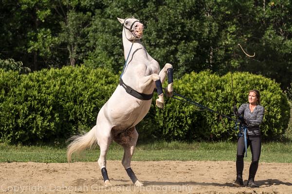 Herrmanns' Royal Lipizzan Stallions