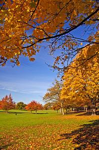 Autumn colours in Gadebridge Park,  Hemel Hempstead