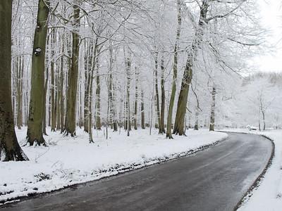 Ashridge Woods, Hertforshire, UK