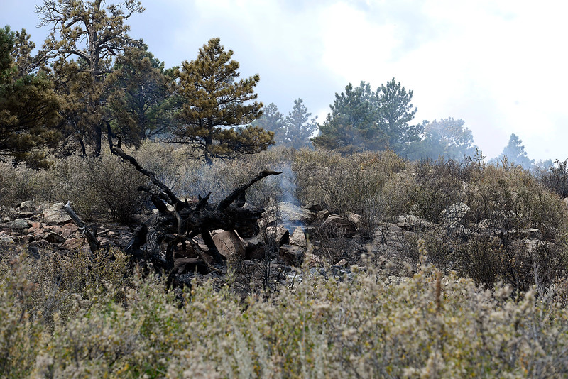 Trees and brush still smolder Thursday, Aug. 18, 2016, on Hertha Ridge after a fire started there Wednesday southeast of Carter Lake. The 73 acre fire was 65 percent contained eary Thursday. (Photo by Jenny Sparks/Loveland Reporter-Herald)