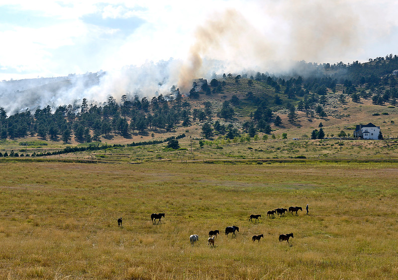 David Shumpert moves his horses to a different pasture on X2D Ranches as an 80-acre wildfire burns on Hertha Ridge just southeast of Carter Lake on Wednesday, Aug. 17, 2016. Shumpert wanted to make sure the animals were in an area where he could get them out in a hurry in case he was evacuated.  (Photo by Jenny Sparks/Loveland Reporter-Herald)