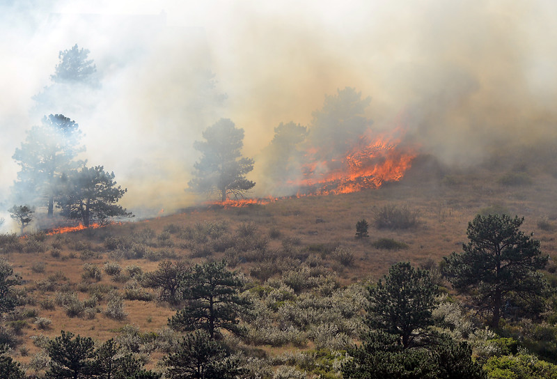 Flames consume trees and grasses during an 80-acre wildfire on Hertha Ridge just southeast of Carter Lake on Wednesday, Aug. 17, 2016.  (Photo by Jenny Sparks/Loveland Reporter-Herald)