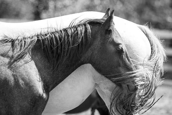 HiCaliber Horse Rescue