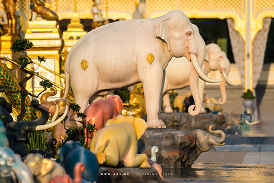 Elephants and the Anodard Pond, North side of the Royal Crematorium for His Majesty King Bhumibol Adulyadej