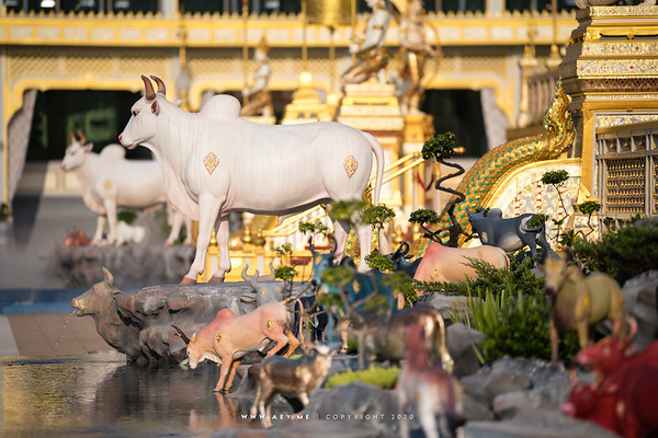 Cow and the Anodard Pond at the South Side of the Crematorium for His Majesty King Bhumibol Adulyadej โคและสระอโนดาต ด้านทิศใต้ของพระเมรุมาศพระบาทสมเด็จพระปรมินทรมหาภูมิพลอดุลยเดช