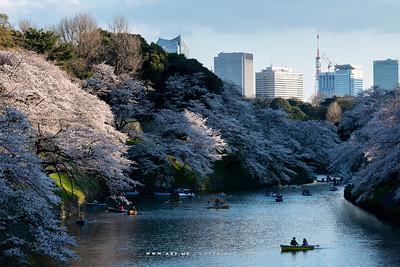 Chidorigafuchi & Kudanzaka Park