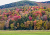 Leaf Peepers Delight
