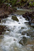 January 22 - After most of a week of rain, Adobe Creek flows vigorously.
