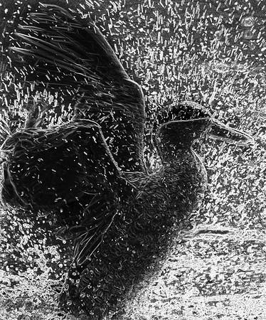 Antony Wilsdon with Splashing Duck