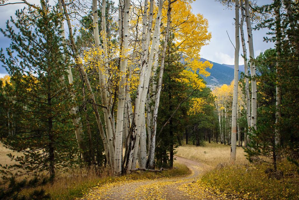 October Autumn In Hart Prairie