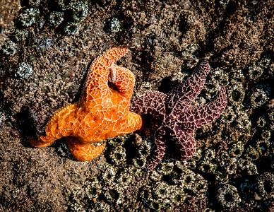 Waltz of the Starfish