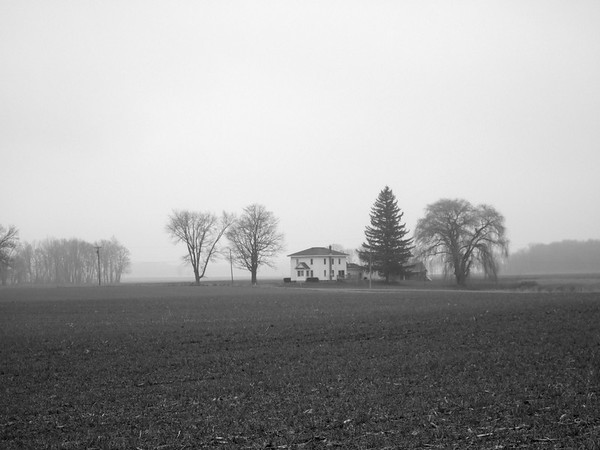Another Foggy Field
