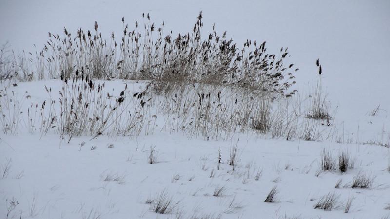 Grasses Along East Bay