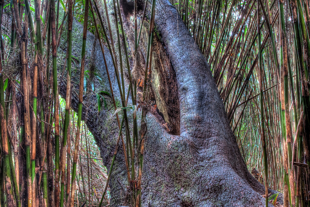 20091213-old tree