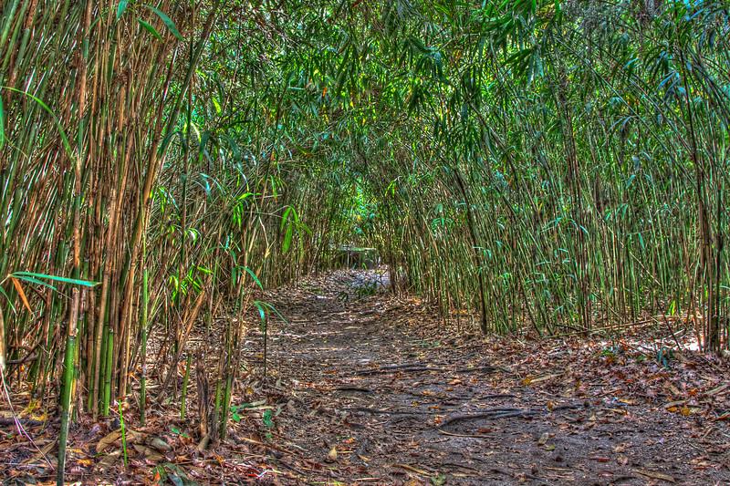 20091213-Bamboo Arch jm