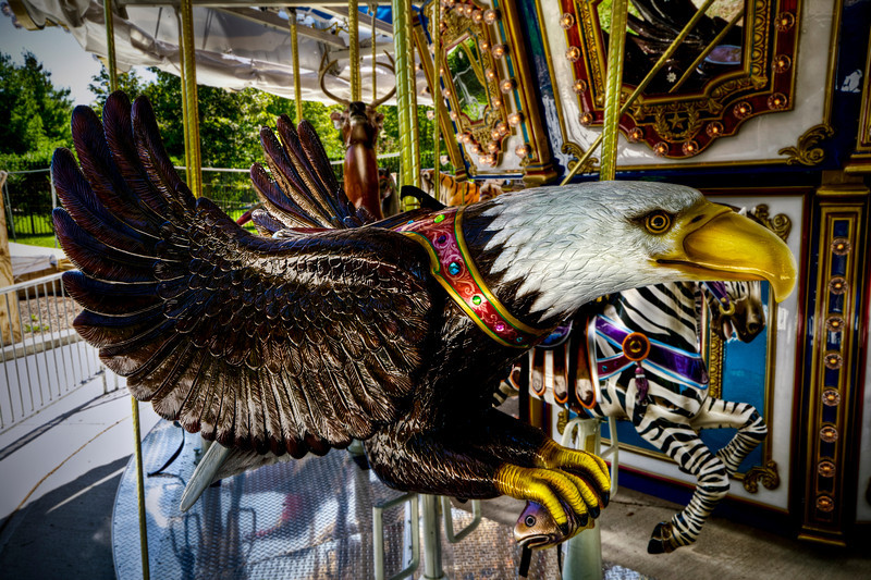 """""""The Eagle""""<br /> Buttonwood Park Zoo<br /> New Bedford, MA<br /> September 6th, 2010"""