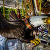 """The Eagle""<br /> Buttonwood Park Zoo<br /> New Bedford, MA<br /> September 6th, 2010"