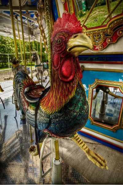 """""""The Rooster""""<br /> Buttonwood Park Zoo<br /> New Bedford, MA<br /> September 6th, 2010"""