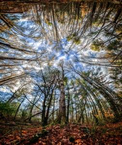 """Sherwood Forest"""