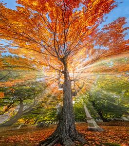 """""""Cemetery Tree"""""""
