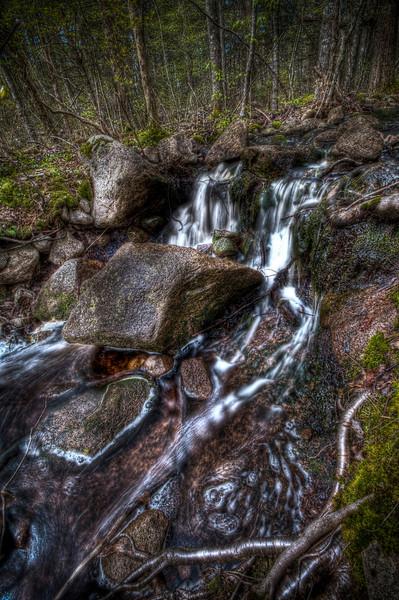 Copicut Woods<br /> Fall River, MA<br /> April 30th, 2010