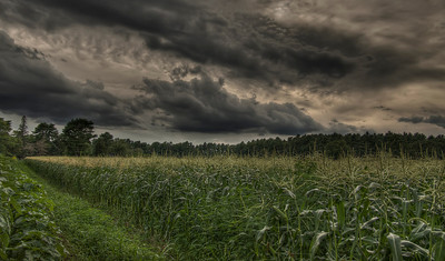 """Wished Into the Cornfield..."" August 3rd, 2011"