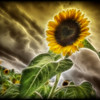 """The Fractailus Heart of the Sunflower""<br /> August 3rd, 2011"