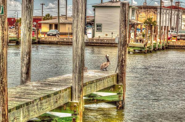 Dock Pelican