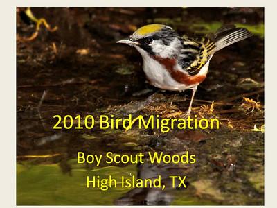 2010 Bird Migration @ High Island - Guide to Birds