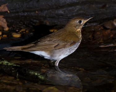 Spring Migration - High Island on 050412