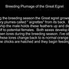 Breeding Plumage_750_7413ass
