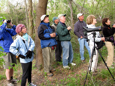 Birders enjoy the guide bird walk at 8:00am in Boy Scout Woods