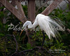 egret by structure_1122