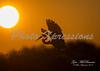 egret sunrise_7491