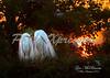 egrets sunrise_7307