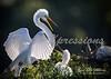 egret talk_7969