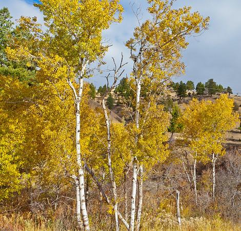 Fall Color Near Helena, MT