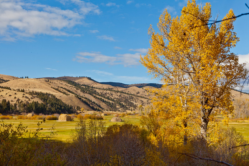 Fall Color Near Helena, MT