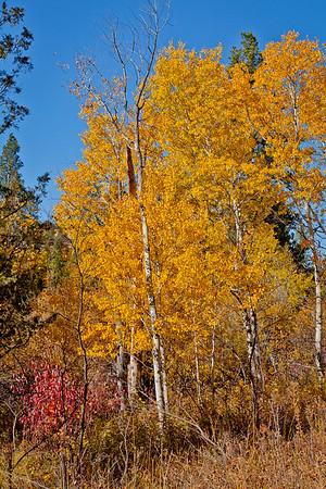 Fall Color @Harpers Lake
