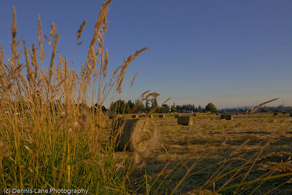Hay Field -Western Washington:   file name for ordering listed below